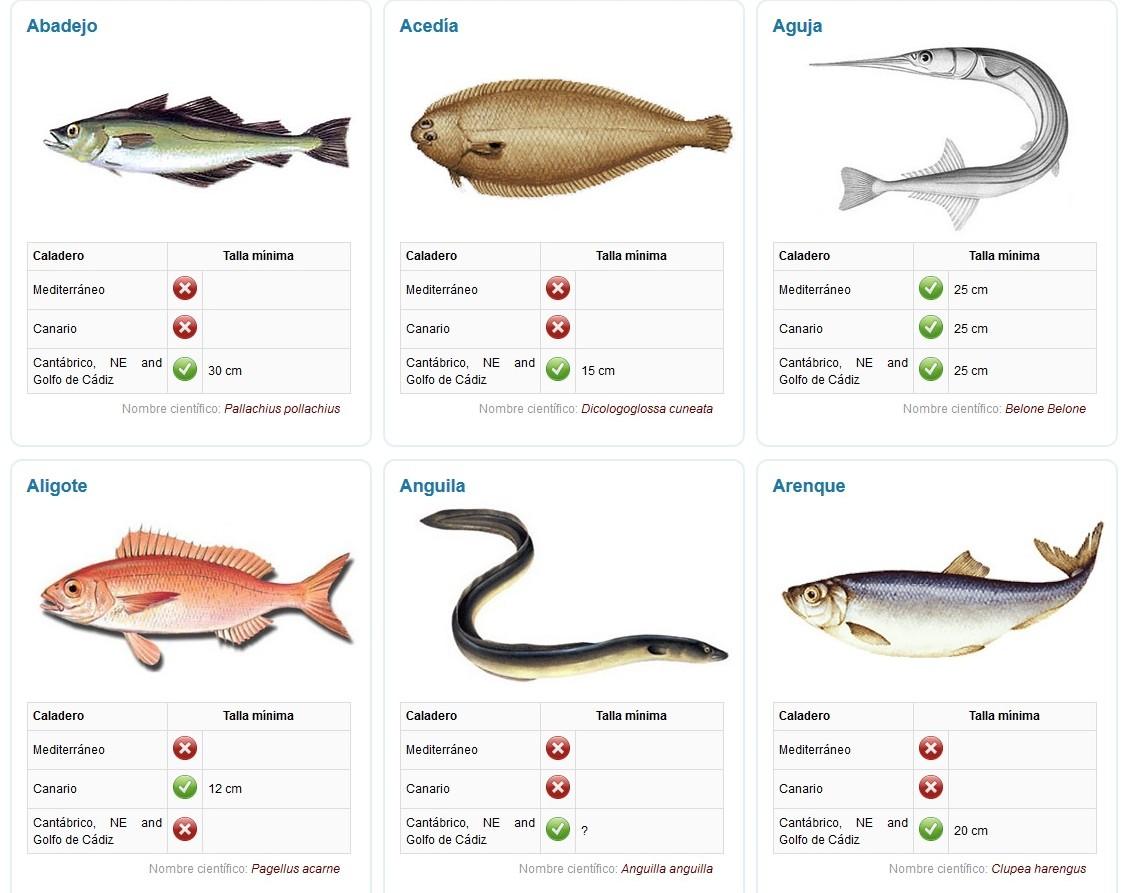 Tallas m nimas de peces y mariscos en asturias y espa a for Como se cultivan los peces